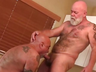 Older hairy guys enjoy blowjobs and bum fucking